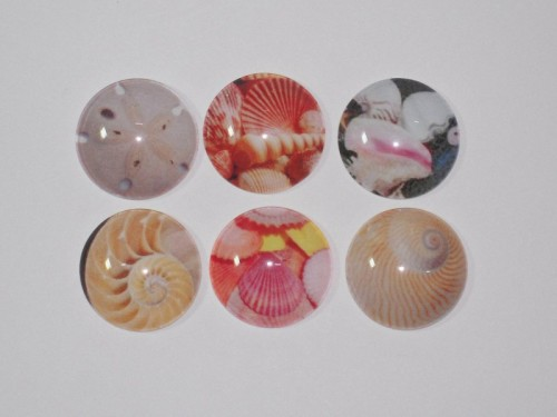 Seashell magnets!image